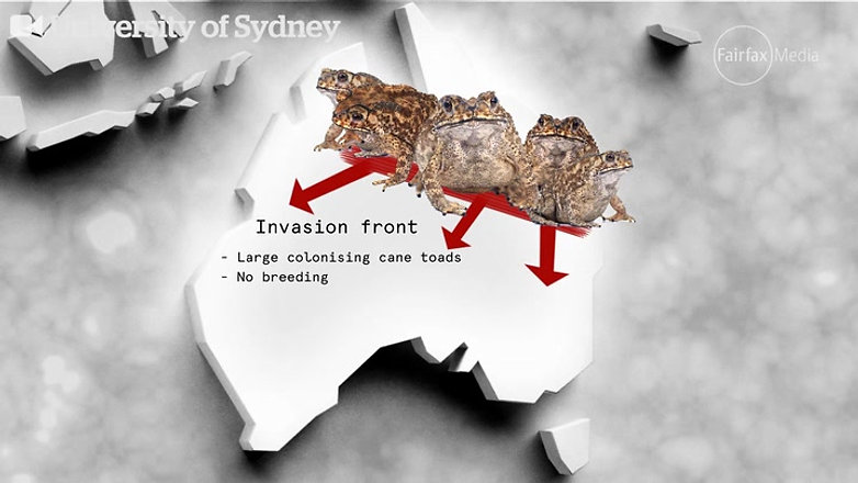 Surviving the cane toad invasion