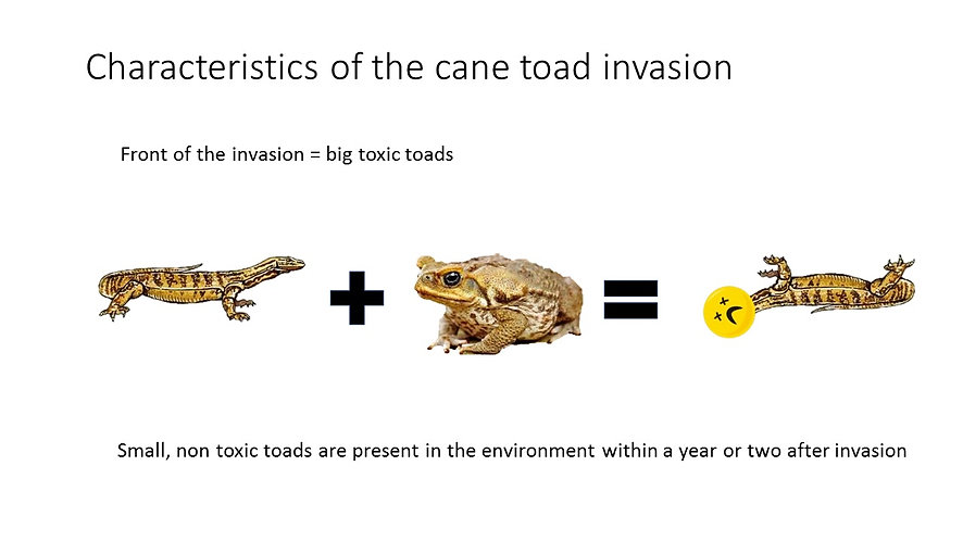 Teacher toads and CTA deployment
