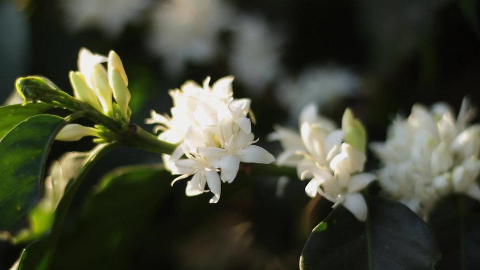 Blossom & Flowering