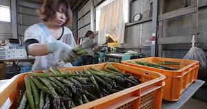 uchiyama farm_2017