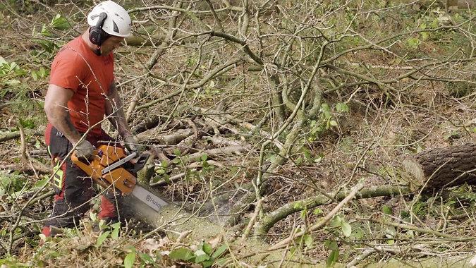 Spartan Tree Care