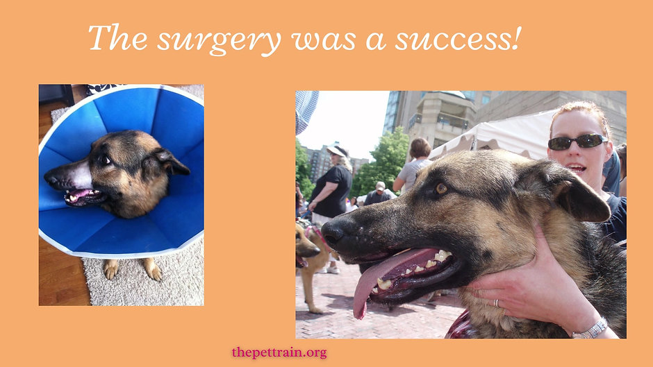 Carlos: from wounded to rescued