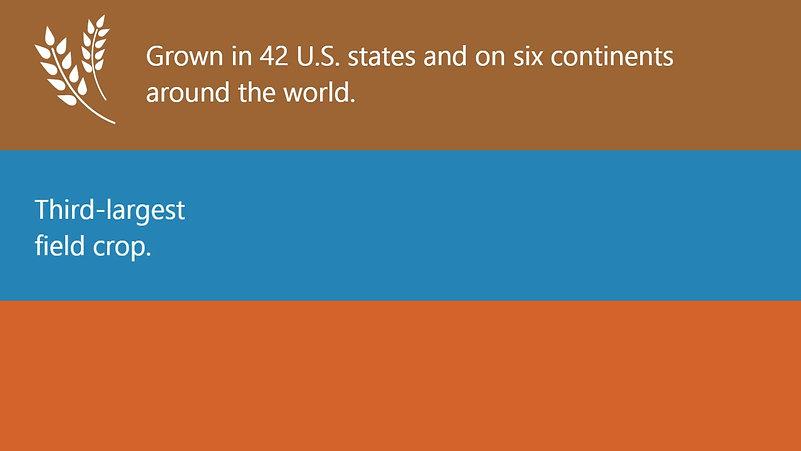 12. Wheat and the U.S. Economy