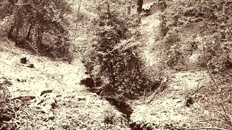 neige sur le verger de théiers de Sylveno-5 janvier 2021