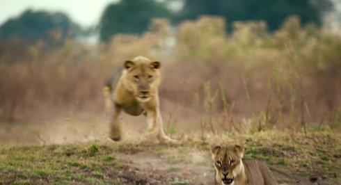 Love Nature Trailer