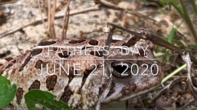 Sunday Sermon - June 21st, 2020 (Father's Day)