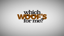 Which Woof's For Me? EP2 Excerpt