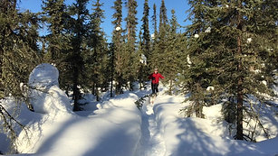 Snowshoe with Kili