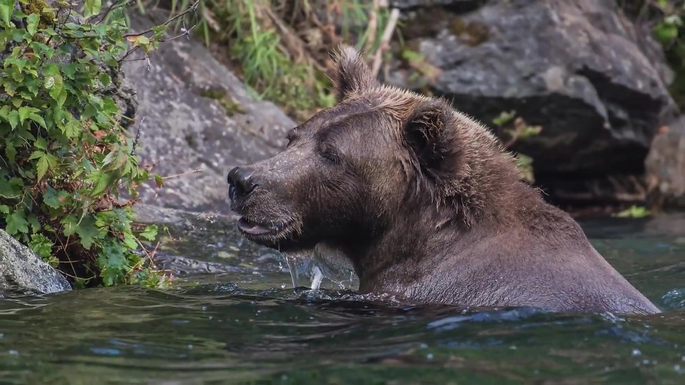 Bear viewing and glacier flight