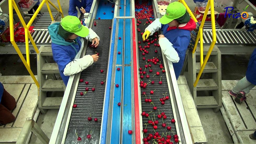 Prize Cherries
