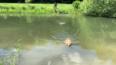 Puppy en Jonge honden - Volgen over water