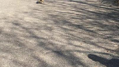 Puppy en Jonge honden - Dustin