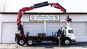 Loffredo's Tree Trimming & Removal Commercial