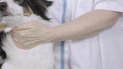 TVM_donner-comprime-chien