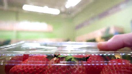 Der Weg so mancher Erdbeere auch in Deutschland..