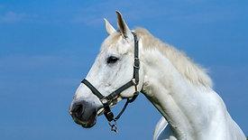 Managing an Older Horse