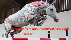 Trailer: Jumping from the Anatomical Approach E4