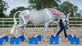 Artistic Flair - Gillian's Horse!