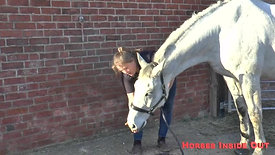 Teach Your Horse to Lower Head