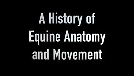 The Study of Equine Anatomy & Movement through History