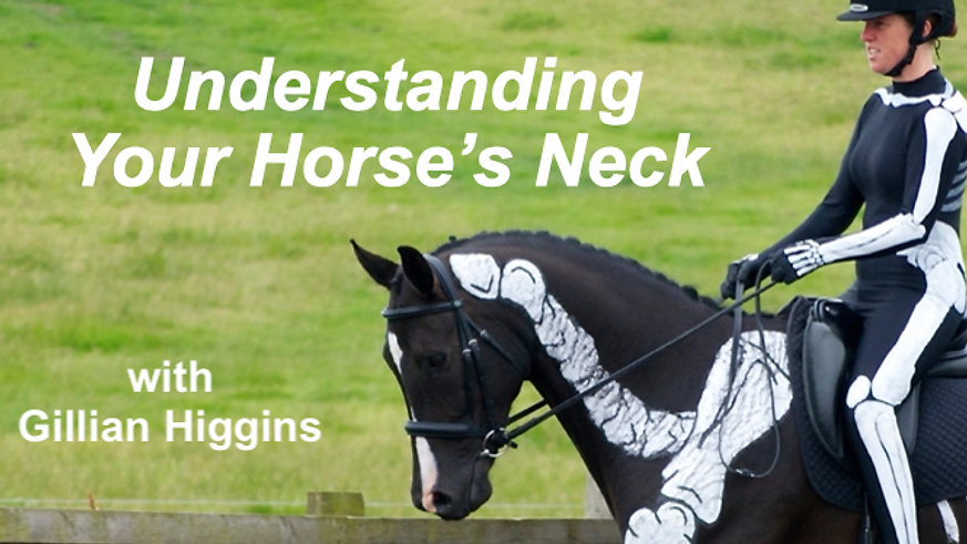 Understanding Your Horse's Neck
