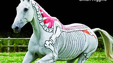 Horses Inside Out: Movement from the Anatomical Perspective
