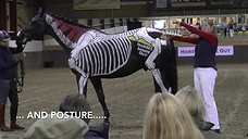 Horses Inside Out Lecture Demonstrations