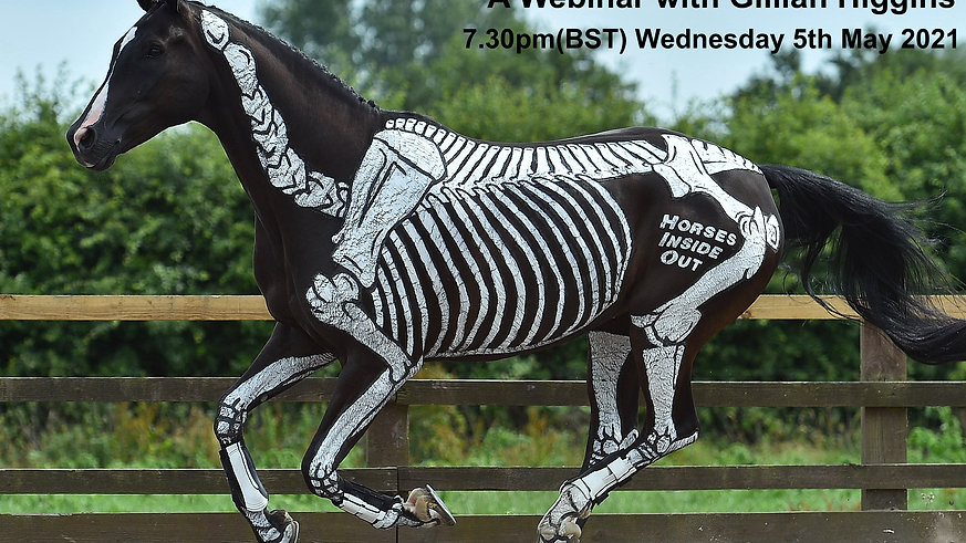Skeletal Maturity and Exercises for Young Horses