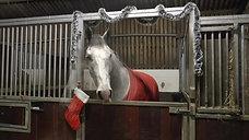 Christmas Horses Santa