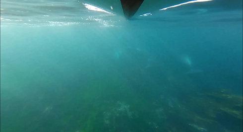 Ile de Sein nautisme- balade accompagnée à la rencontre des dauphins
