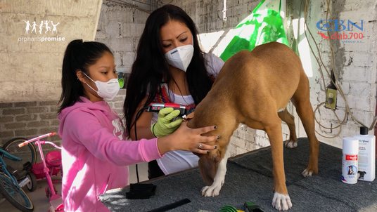 Despensa para Adriana y su estética canina - Club 700 México