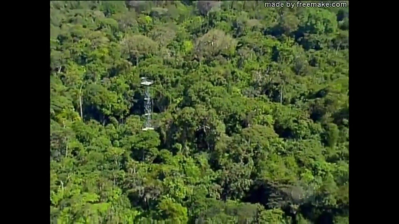 South Amazon Forest