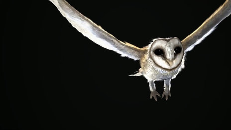 Owl Video Game Character[1080]