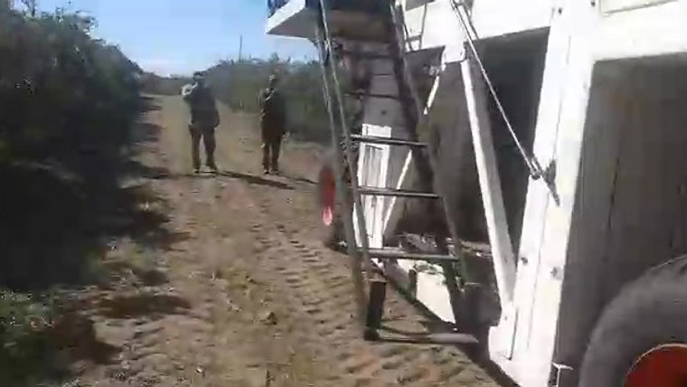 VIDEO COSECHADORA OLIVAR