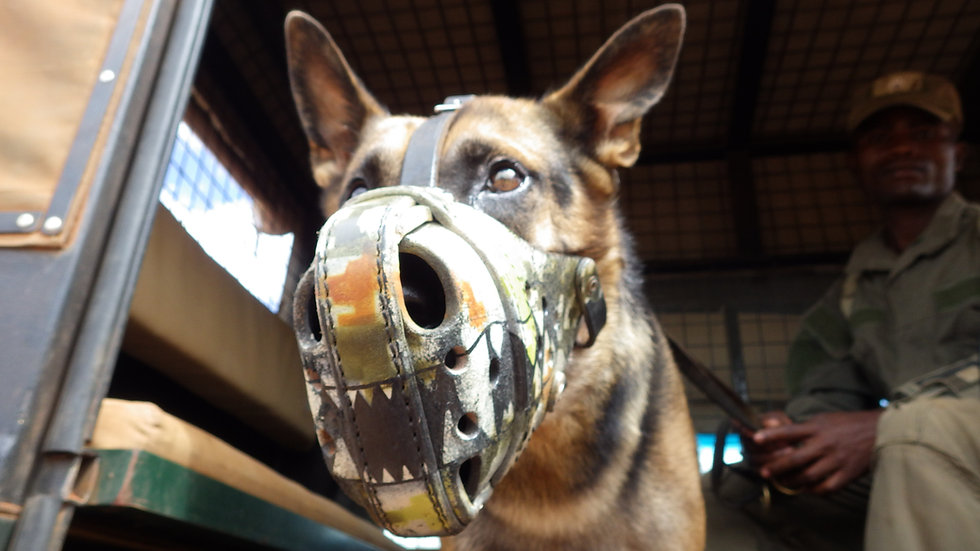 CANINE CONSERVATION