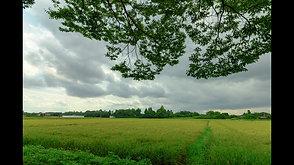 茂原の田園風景   Rural scene of Mobara.