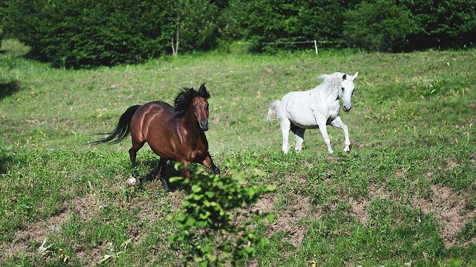 Zakaj uporabljamo konje za učenje?