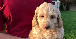 Maggie/Winston 6 weeks