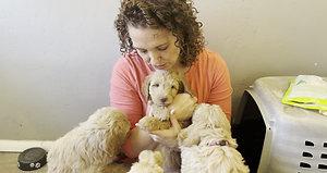Lolli/Winston puppies 7 weeks
