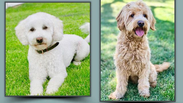June/Knox puppies