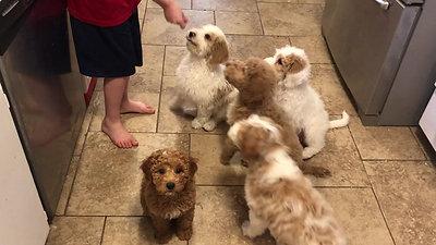 Annie puppies training