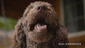 KOA - EXPERIENCE