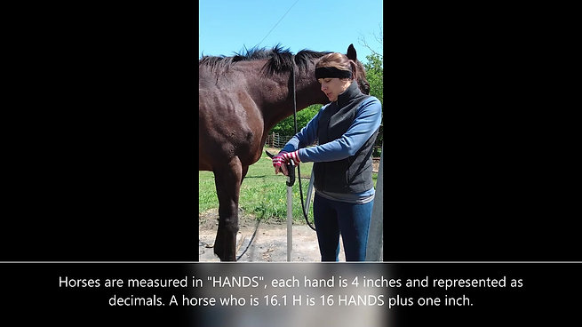 Horse 101: Measuring Your Horse