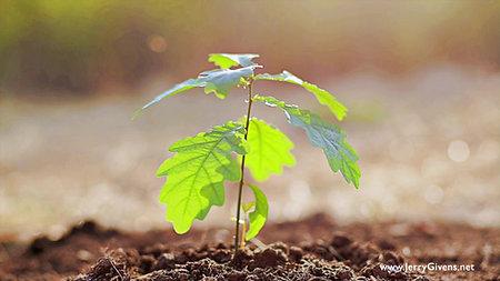 Planting the Seed - Yoga Nidra