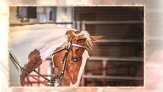 Dallas Charity Horse Show