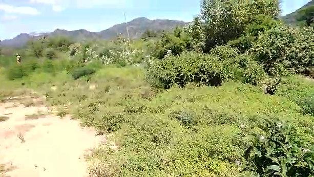Kavuvu Self Help Group - Tree Planting 2020