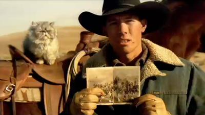 EDS - Cat Herders