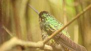 ecoparque nukasa colibris