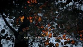 Origins - Discover Dr. Weil for Origins Mega-Mushroom
