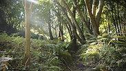 Forest Jardin  Oct 2021